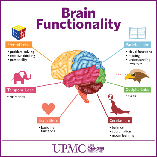 get to know the parts of your brain | upmc healthbeat, Human Body