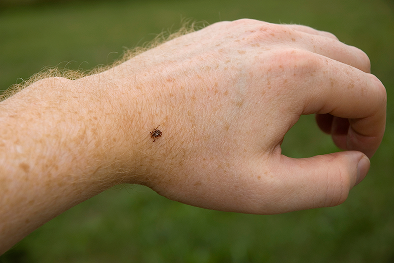 tick on hand