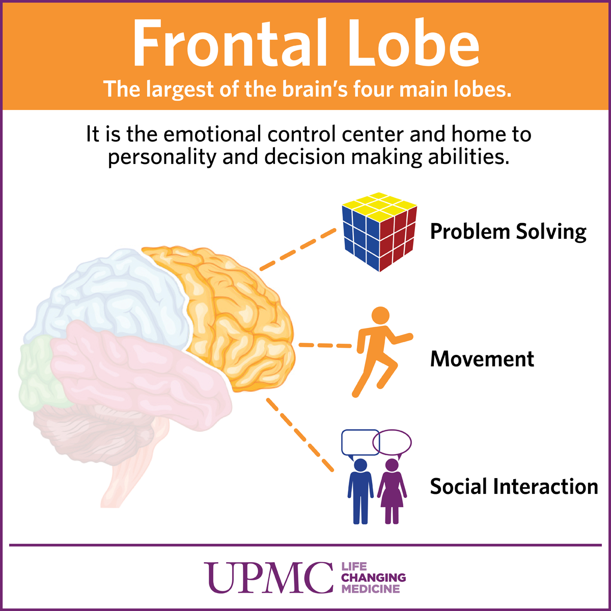 Get To Know Your Brain: The Frontal Lobe | UPMC HealthBeat