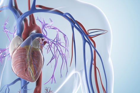 Aortic and Mitral Valve Disease Treatment Options