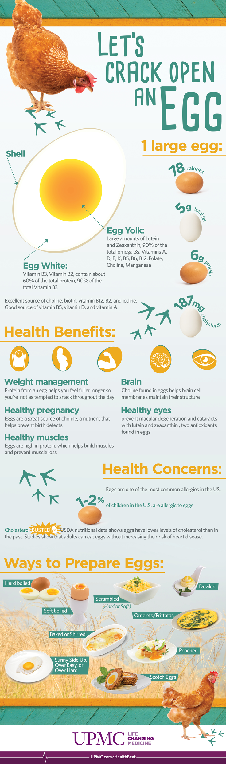 benefits of eggs infographic
