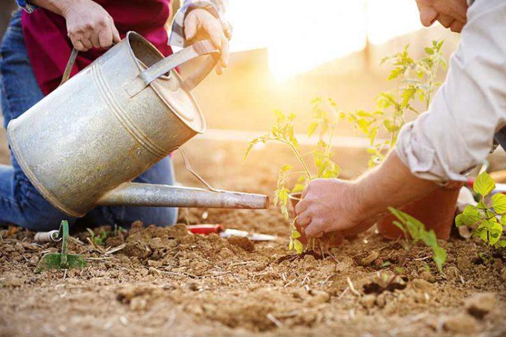 5 Tips for Maintaining a Healthy Garden