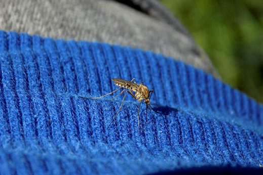 Learn how to prevent mosquito bites