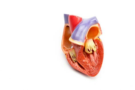 Mechanical vs. Tissue Heart Valves: What's Right for Me?