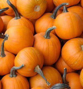 Pumpkins are a healthy food