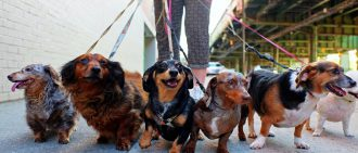 Dogs and heart health
