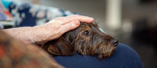 Learn how pet therapy helps those facing cancer